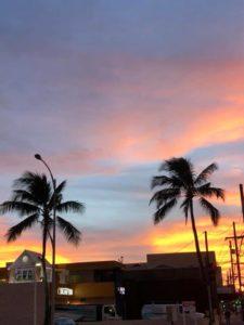 ハワイ 7日41件から8日23件に