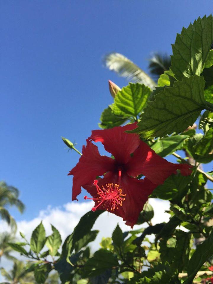 ハワイ 8/2以来の2桁新規感染者数でしたが・・・