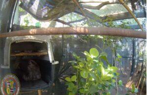 ハワイ ホノルル動物園のナマケモノが出産