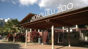 ホノルル動物園が今月後半にトワイライトツアーを再開