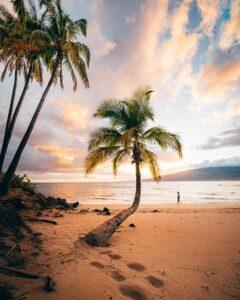 ハワイ オアフ島は8月25日から屋内で10人、屋外で25人に縮小へ
